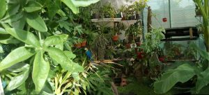 Inside the greenhouse from the doorway